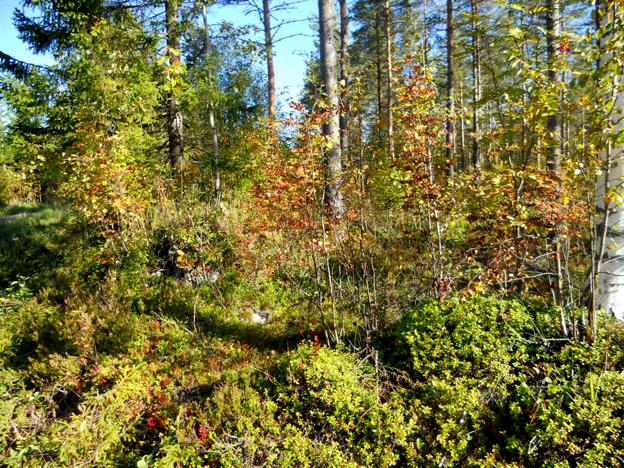 metsastajat nuotiopaikka 4