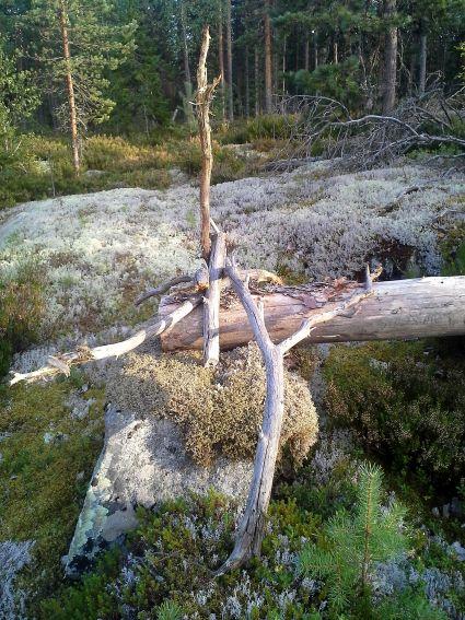 M puut