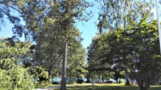 Tuomarniemen puulajipuisto