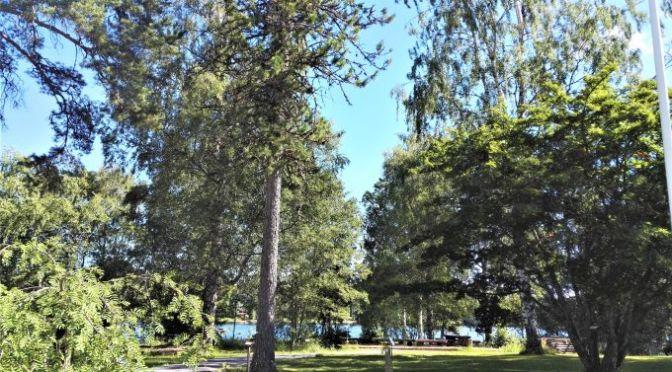 Tuomarniemen puulajipuisto ja laavu