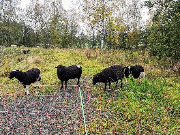 lampaat läheltä